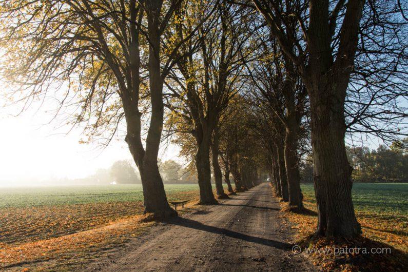Herbststimmung auf Rügen
