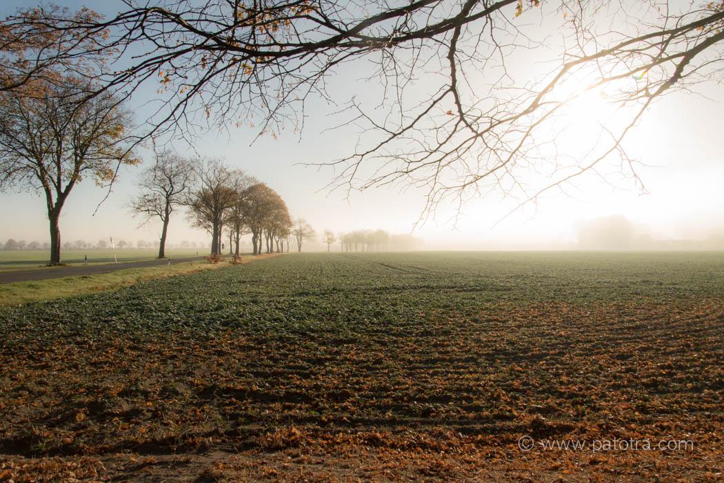 Nebel Ruegen Mystisch