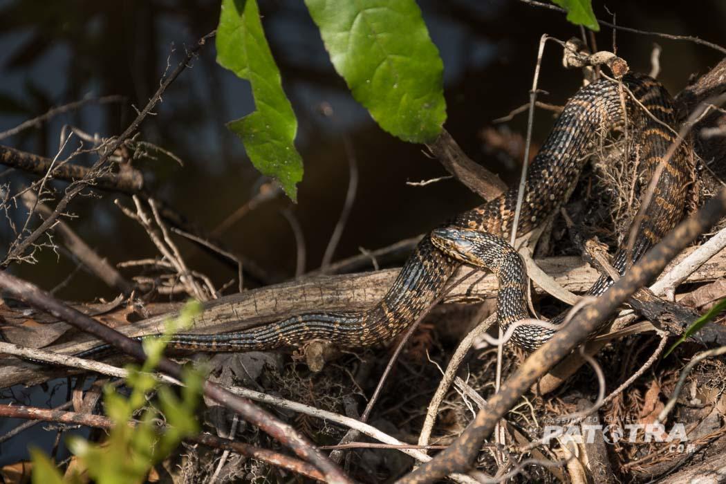 Schlangen Everglades