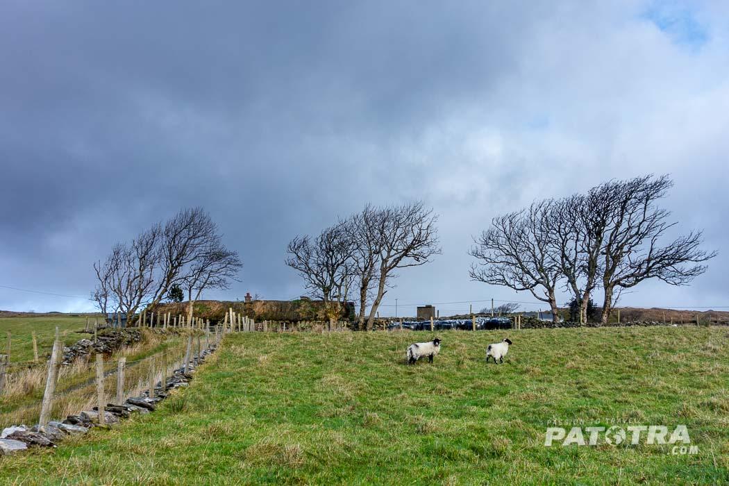 Irland Reiseziel im Winter