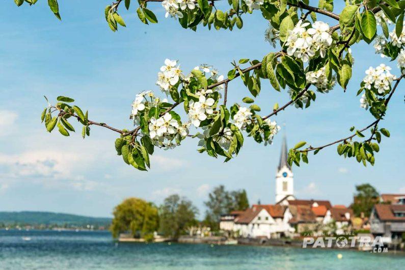 Blütezeit am Bodensee