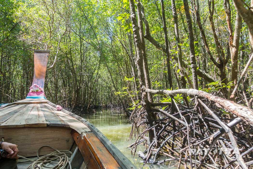 Mangroven Krabi
