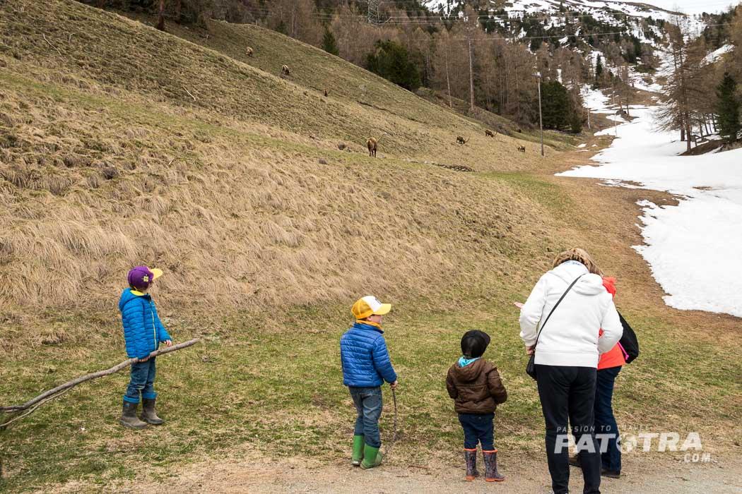 Steinbockbeobachtung Familien