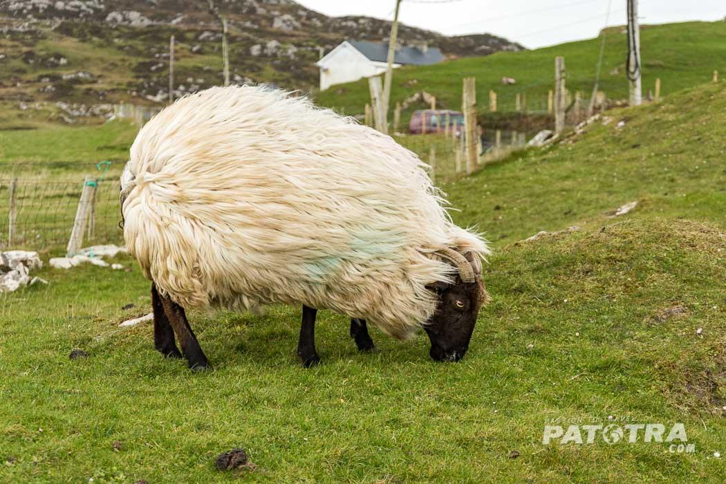 Wind auf Inishbofin