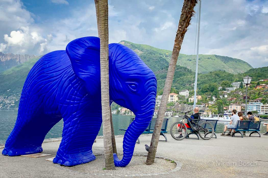 Elefant in Ascona
