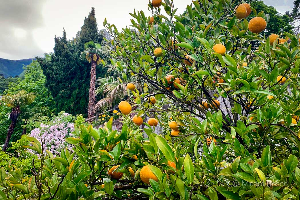 Garten des Hotel Brenscino