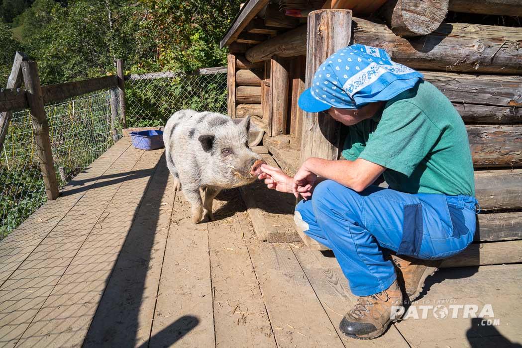 Angelika Bandli mit dem Schweinschen Tschiggali