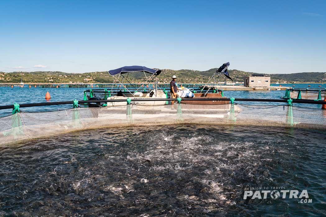 Fonda Fischfarm Adria