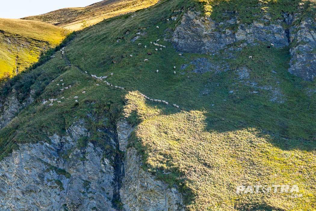 Die Schafe klettern den Hang hinauf in die Sonne ...