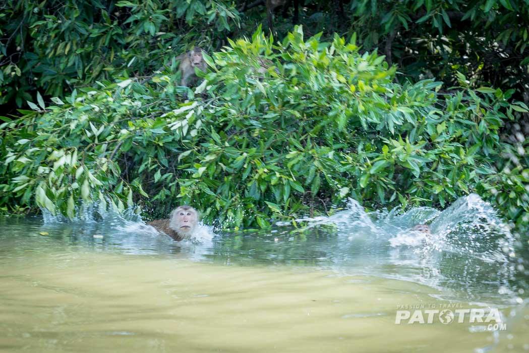 Affen springen ins Wasser