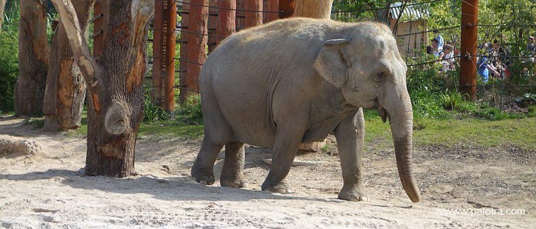 Elefanten Zoo Zürich