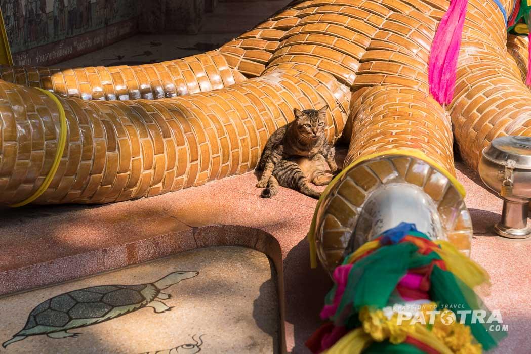 Die Katze sitz dem Drachen zu Füssen