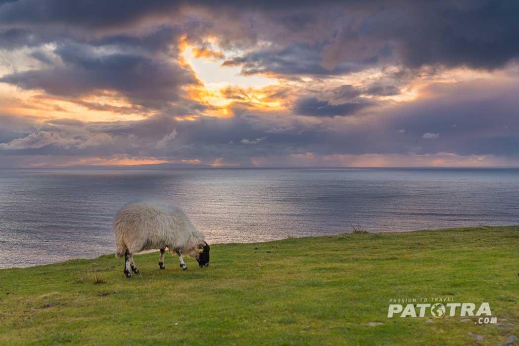 Schaf an der Küste von Donegal