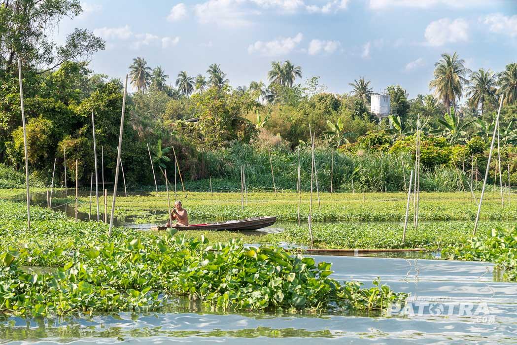 Bauern ernten Wasserspinat
