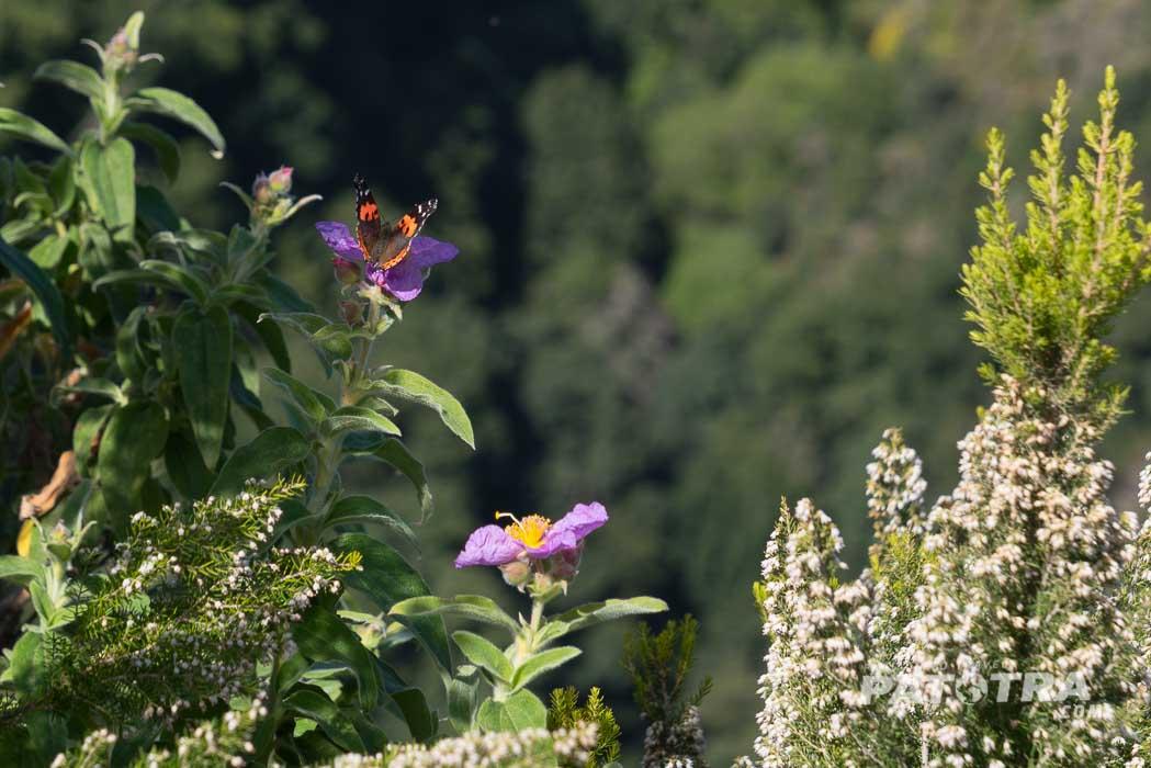 Rund um den Cubo de la Galga ist die Natur vielfältig und üppig
