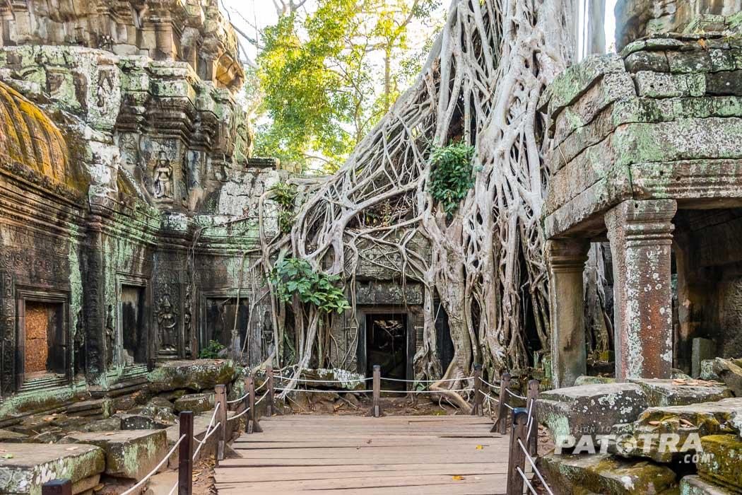 Natur und Tempel verschmelzen in Angkor