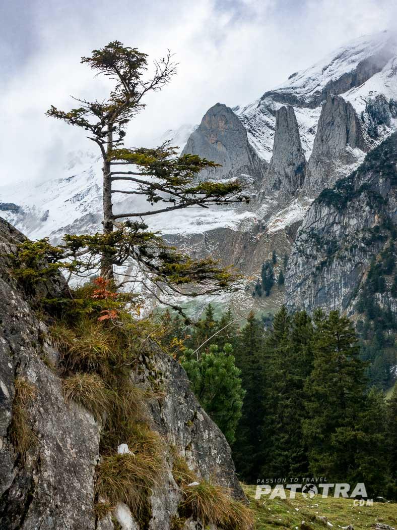 Herbstfreuden im Alpstein